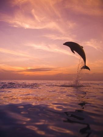 https://imgc.artprintimages.com/img/print/jumping-bottlenose-dolphin_u-l-pzkrak0.jpg?p=0