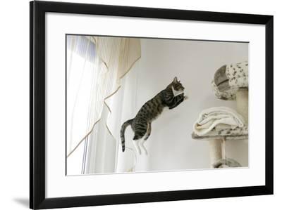 Jumping Cat.-Krzysztof Smejlis-Framed Photographic Print