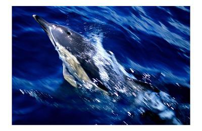Jumping Dolphin-Charles Glover-Art Print