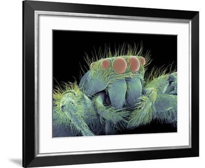 Jumping Spider, SEM-Susumu Nishinaga-Framed Photographic Print