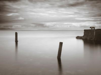 Jumptune-David Baker-Photographic Print