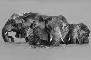 Elephant Crossing The River by Jun Zuo
