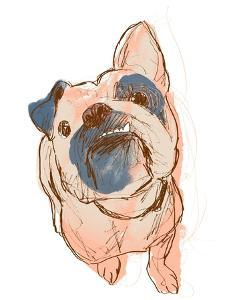 Dog Portrait--Bobo by June Erica Vess