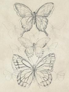 Vintage Butterfly Sketch II by June Erica Vess