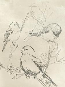 Vintage Songbird Sketch II by June Erica Vess