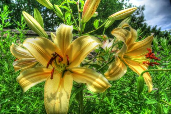 June Lilies-Robert Goldwitz-Photographic Print