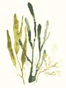 Kelp Collection I by June Vess