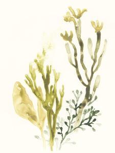 Kelp Collection II by June Vess