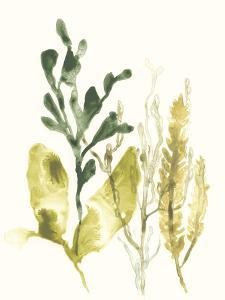 Kelp Collection III by June Vess