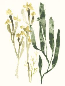 Kelp Collection IV by June Vess