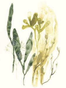 Kelp Collection VI by June Vess