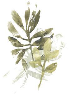 Lichen & Leaves III by June Vess