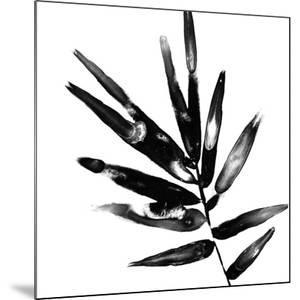 Monochrome Tropic IX by June Vess