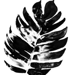 Monochrome Tropic VII by June Vess