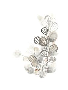 Neutral Botany I by June Vess