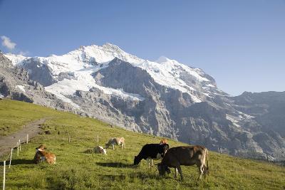 Jungfrau, Kleine Scheidegg, Bernese Oberland, Berne Canton, Switzerland, Europe-Angelo Cavalli-Photographic Print