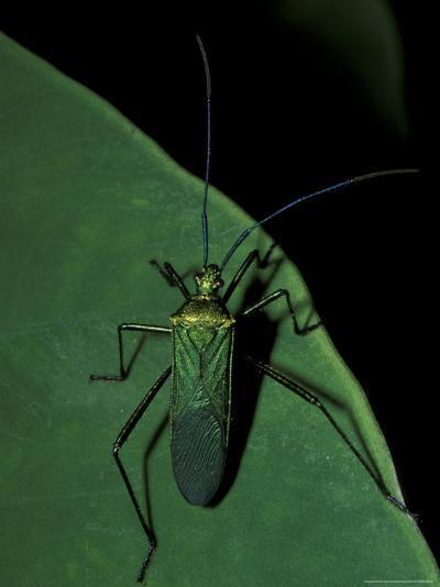 Jungle Bug, Madre de Dios, Peru-Andres Morya-Photographic Print