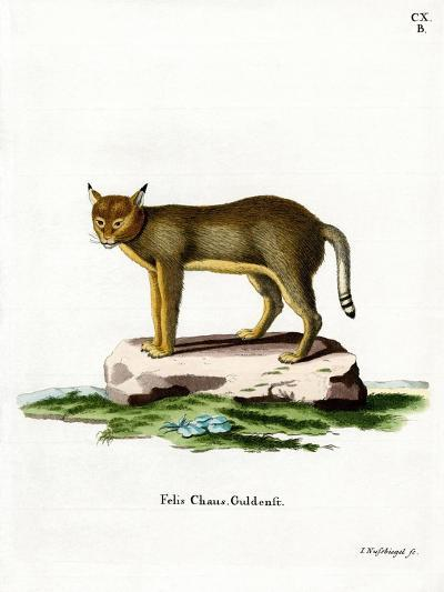 Jungle Cat--Giclee Print