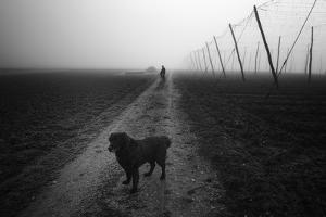 Waiting for a Friend by Jure Kravanja