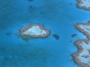 Aerial View of the Heart Reef, Hardy Reef, Great Barrier Reef, Queensland, Australia by Jurgen Freund