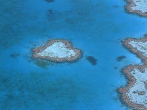 Aerial View of the Heart Reef, Hardy Reef, Great Barrier Reef, Queensland, Australia by Jurgen Freund