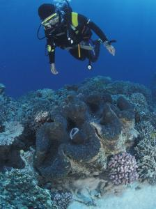 Diver and Giant Clam in Coral Reef, Great Barrier Reef, Australia by Jurgen Freund