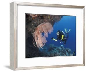 Diver Examines Coral Reef, Great Barrier Reef, Australia by Jurgen Freund
