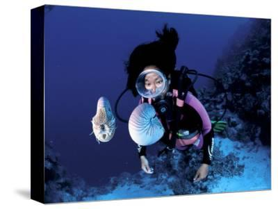 Diver with Pair of Pearly Nautilus, Great Barrier Reef, Queensland, Australia