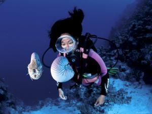 Diver with Pair of Pearly Nautilus, Great Barrier Reef, Queensland, Australia by Jurgen Freund