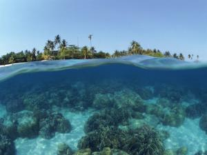 Split-Level Shot of Coral Reef and Shore, Phillippines by Jurgen Freund