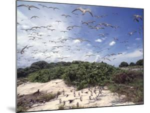 Tern Colony on Tubbataha Reef Philippines by Jurgen Freund