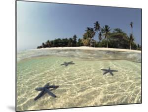 Three Seastars in Shallow Coastal Waters, Philippines, Split- Level Shot by Jurgen Freund