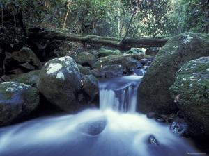 Waterfall in Rainforest, Lamington National Park, Queensland, Australia by Jurgen Freund