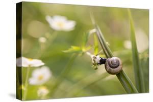 Escargot, Tree Escargot, Flowers by Jurgen Ulmer