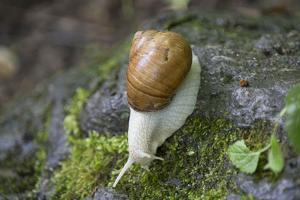 French Escargot, Moss, Stone by Jurgen Ulmer
