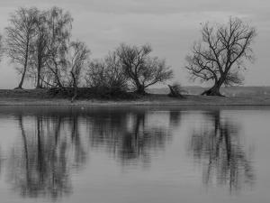 Group of Trees Is Reflected in the Water by Jurgen Ulmer