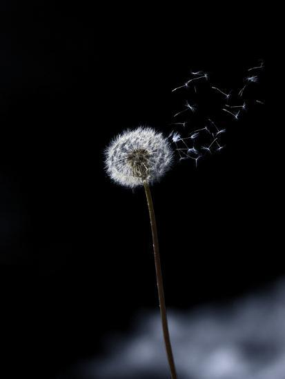 Just a Wind Blow-Marco Carmassi-Photographic Print