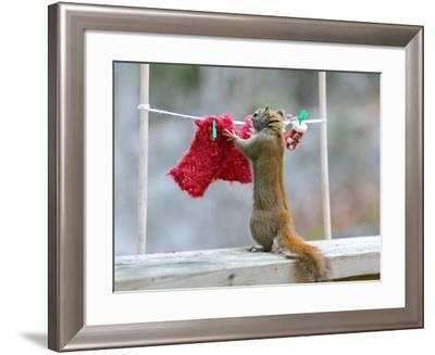 Just Need One More Clothespin-Nancy Rose-Framed Photographic Print