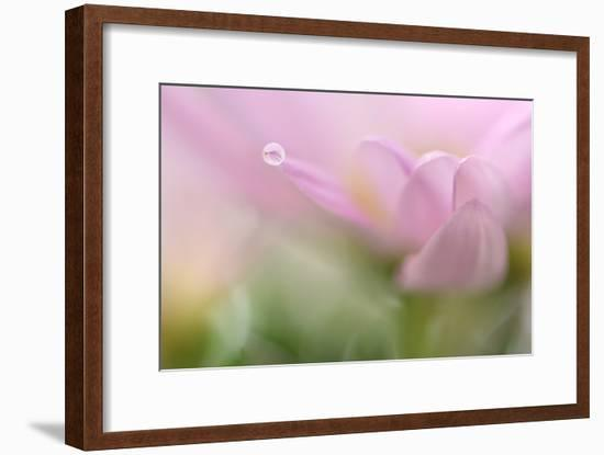 Just One-Heidi Westum-Framed Photographic Print