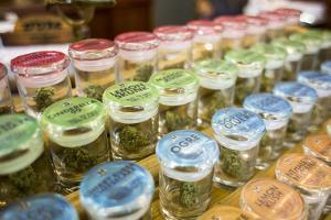 Cannabis Flower At Oregon Coast Cannabis. Manzanita, Oregon by Justin Bailie