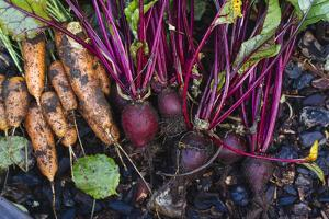 Just Pulled Carrots And Beets Out Of The Garden by Justin Bailie