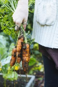 Just Pulled Carrots Out Of The Garden by Justin Bailie