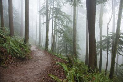 Wildwood Trail In Forest Park. Portland, Oregon
