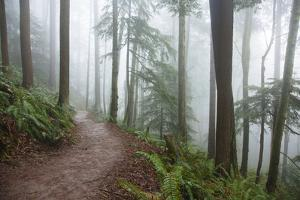 Wildwood Trail In Forest Park. Portland, Oregon by Justin Bailie