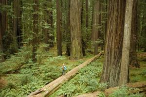 Young Woman Hiking In Humbolt Redwoods State Park, CA by Justin Bailie