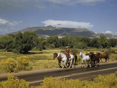 Rancher Leads His Horses on Country Road, Mountains Line Horizon