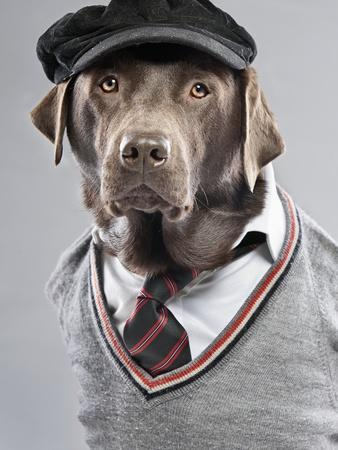 Dog in sweater and cap