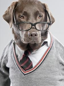 Dog in Sweater and Glasses by Justin Paget