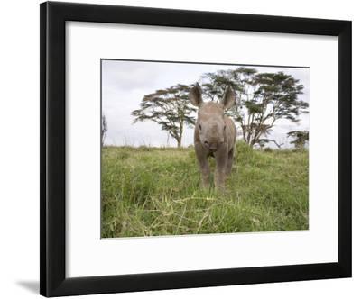 Juvenile Rhinoceros in Samburu National Reserve-Michael Nichols-Framed Photographic Print