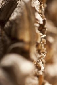Wasp Nest by K.B. White